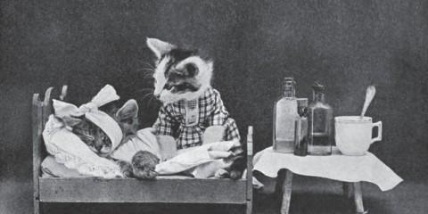 วิธีเล่นกับแมวของคนในอดีต (รวมภาพ) (8)