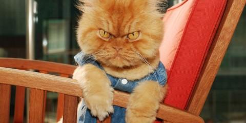Garfi แมวที่หน้าโหดที่สุดในโลก5